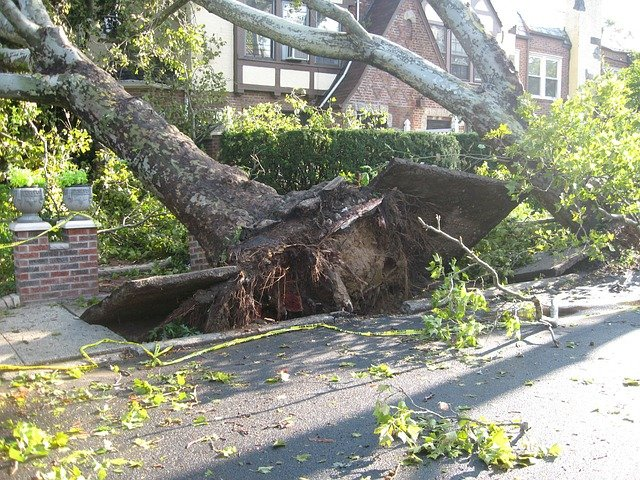 Image of an uprooted tree leaning into a house.