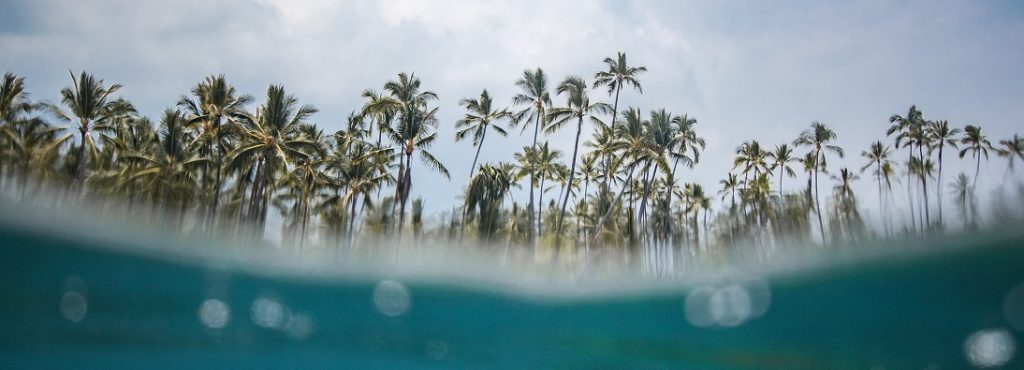 Partial underwater image of a beach in Hawaii with lots of palm trees in the background.