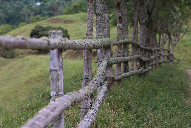 Image of an old wooden fence along a real estate boundary line.